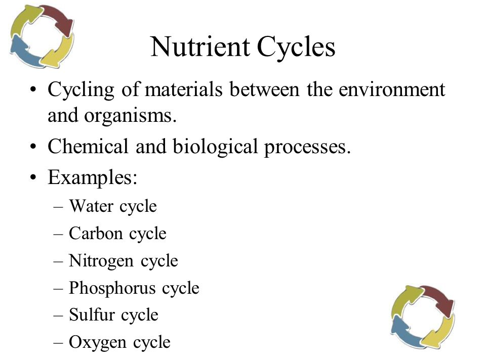 Nutrient Cycles Cycling of materials between the environment and organisms. Chemical and biological processes. Examples: –Water cycle –Carbon cycle –N