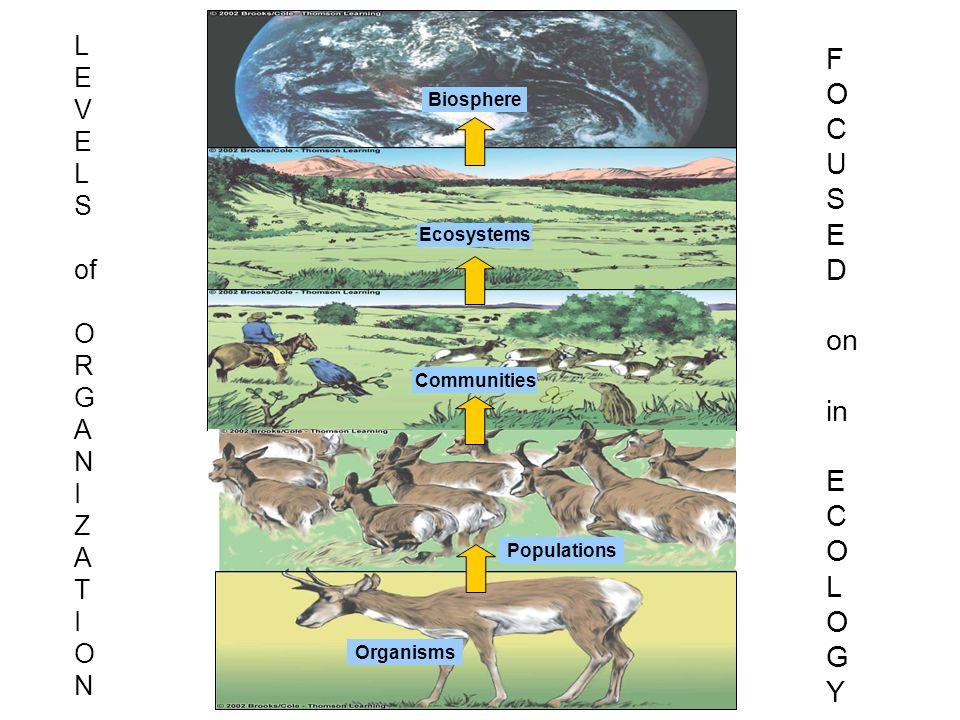 Biosphere Ecosystems Communities Populations Organisms L E V E L S of O R G A N I Z A T I O N F O C U S E D on in E C O L O G Y