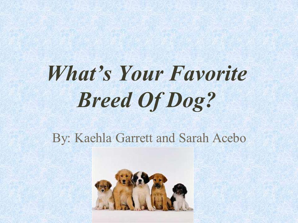 Whats Your Favorite Breed Of Dog? By: Kaehla Garrett and Sarah Acebo