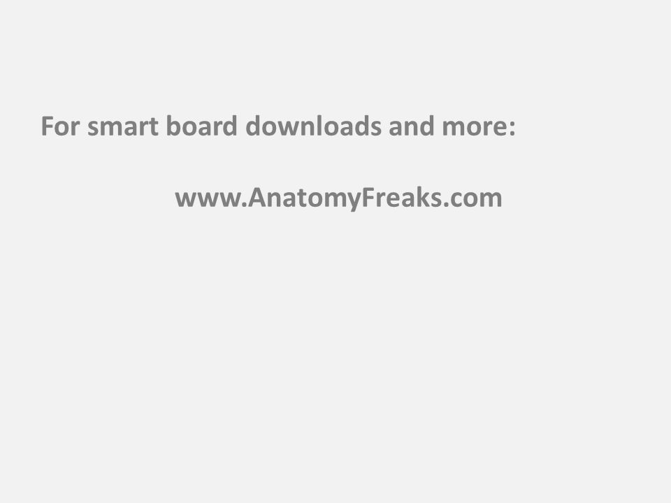For smart board downloads and more: www.AnatomyFreaks.com