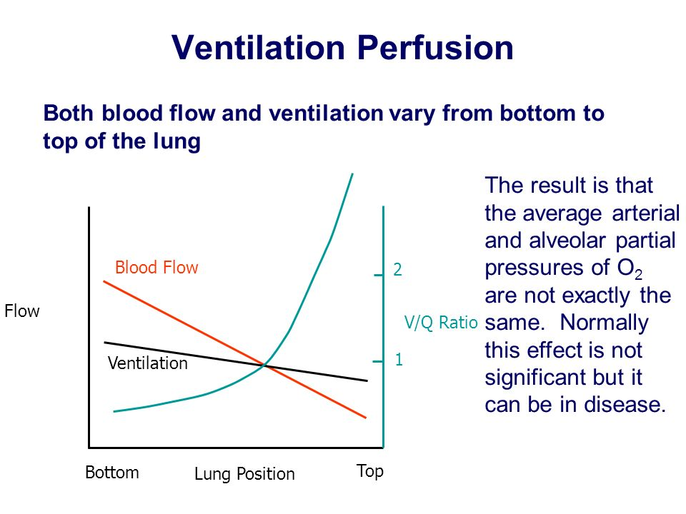Ventilation Perfusion Both blood flow and ventilation vary from bottom to top of the lung Flow Lung Position Bottom Top Blood Flow Ventilation V/Q Rat