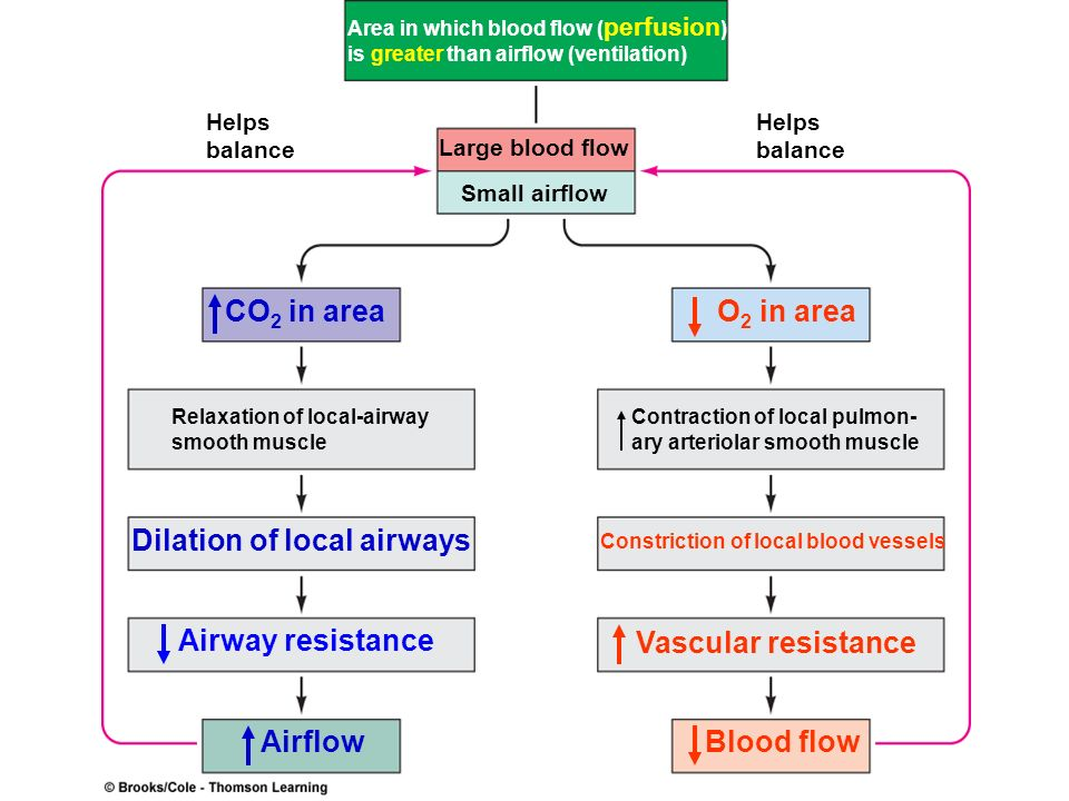 Area in which blood flow ( perfusion ) is greater than airflow (ventilation) Helps balance Helps balance Large blood flow Small airflow CO 2 in area R