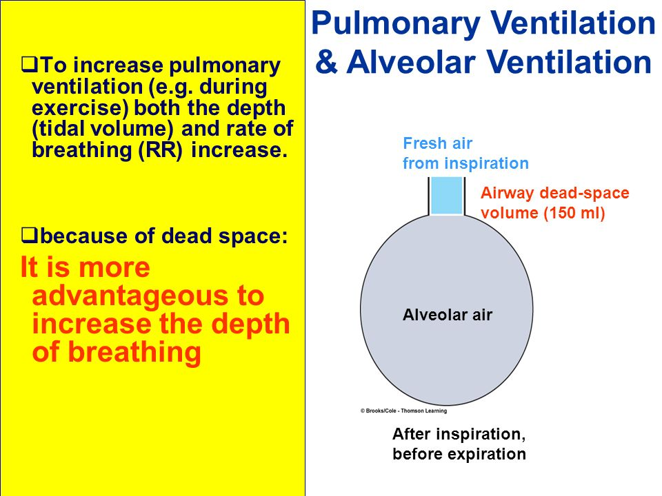 To increase pulmonary ventilation (e.g. during exercise) both the depth (tidal volume) and rate of breathing (RR) increase. because of dead space: It
