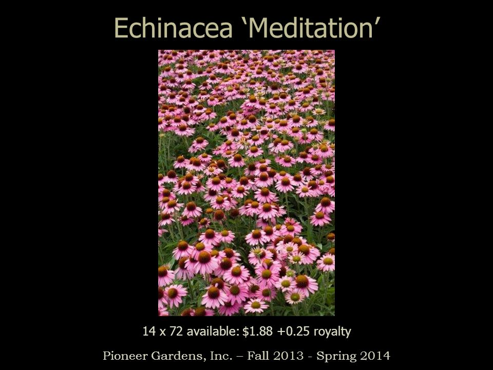 Echinacea Meditation Pioneer Gardens, Inc. – Fall 2013 - Spring 2014 14 x 72 available: $1.88 +0.25 royalty