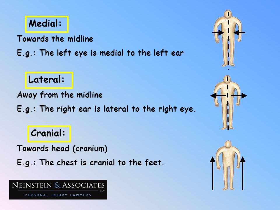 Towards the midline E.g.: The left eye is medial to the left ear Medial: Away from the midline E.g.: The right ear is lateral to the right eye. Latera