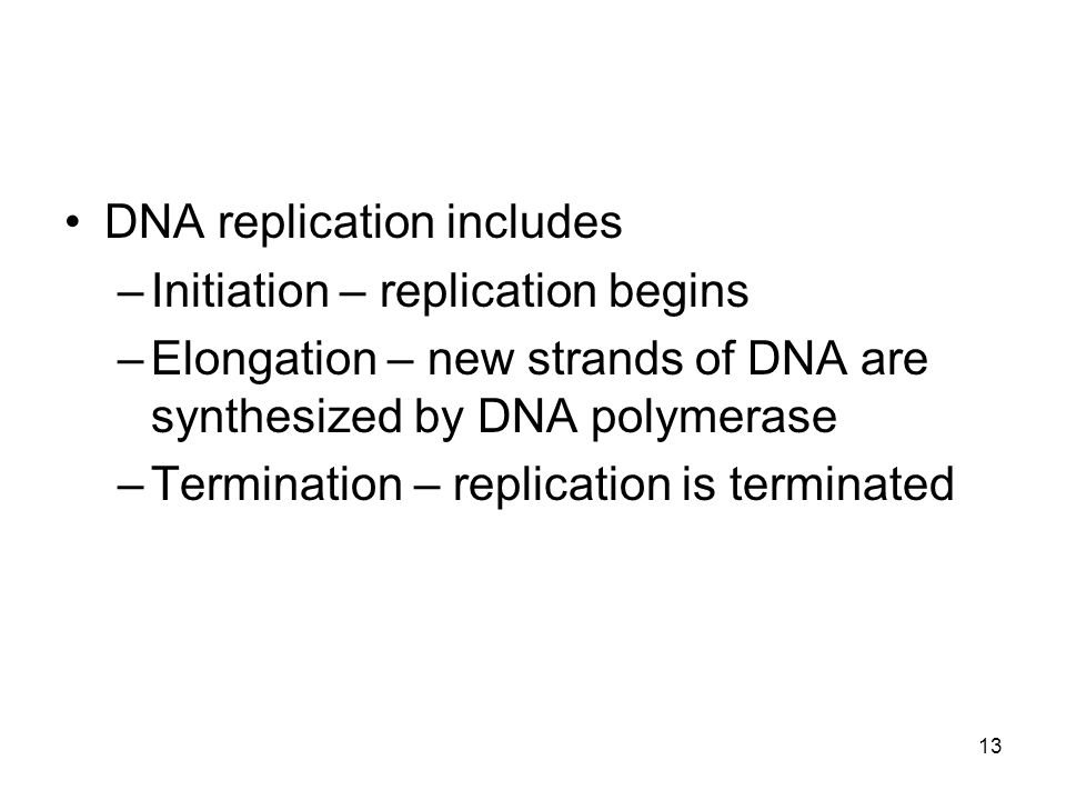 13 DNA replication includes –Initiation – replication begins –Elongation – new strands of DNA are synthesized by DNA polymerase –Termination – replica
