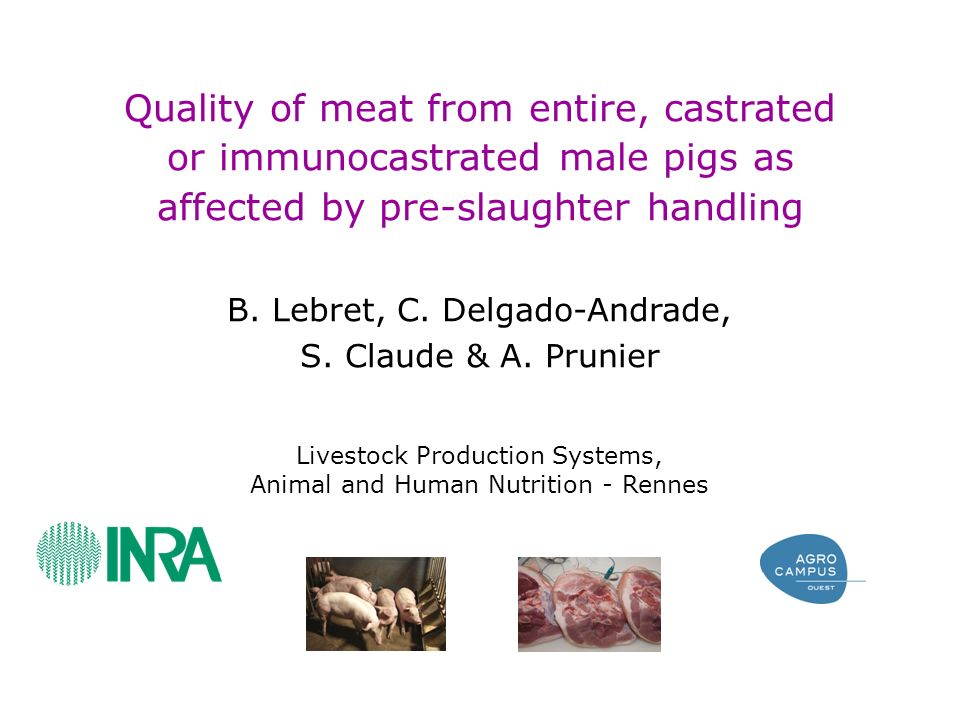 Quality of meat from entire, castrated or immunocastrated male pigs as affected by pre-slaughter handling B.