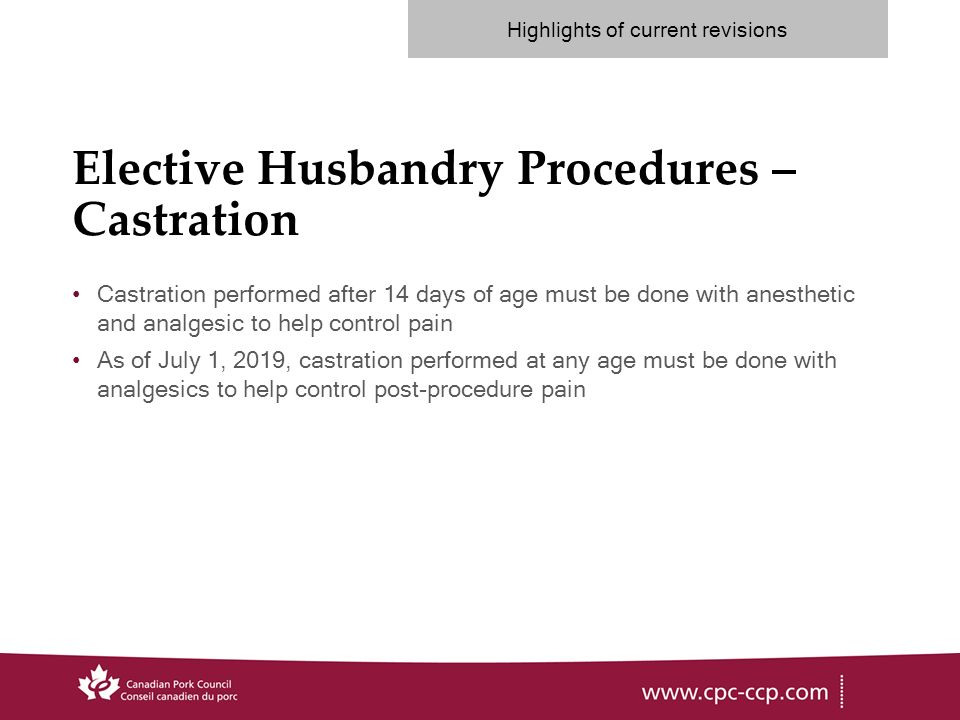 Elective Husbandry Procedures – Castration Castration performed after 14 days of age must be done with anesthetic and analgesic to help control pain As of July 1, 2019, castration performed at any age must be done with analgesics to help control post-procedure pain Highlights of current revisions