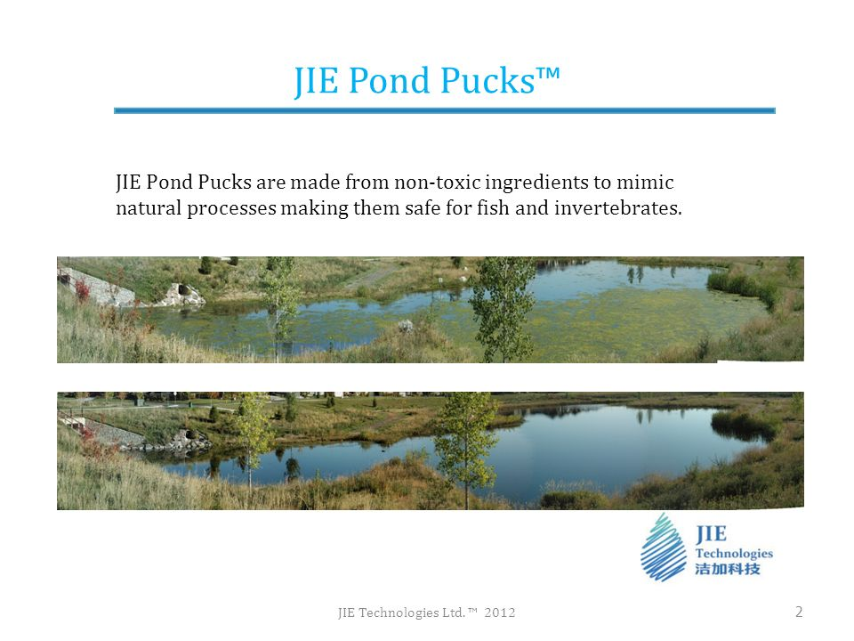 JIE Pond Pucks JIE Technologies Ltd. 2012 2 JIE Pond Pucks are made from non-toxic ingredients to mimic natural processes making them safe for fish an