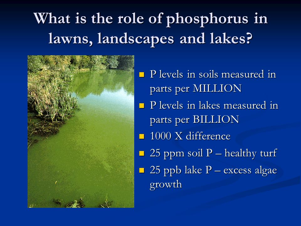 What is the role of phosphorus in lawns, landscapes and lakes? P levels in soils measured in parts per MILLION P levels in soils measured in parts per