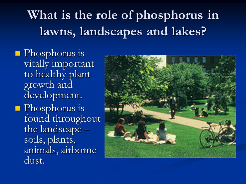 What is the role of phosphorus in lawns, landscapes and lakes.