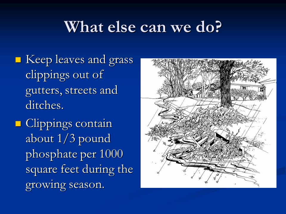 What else can we do. Keep leaves and grass clippings out of gutters, streets and ditches.