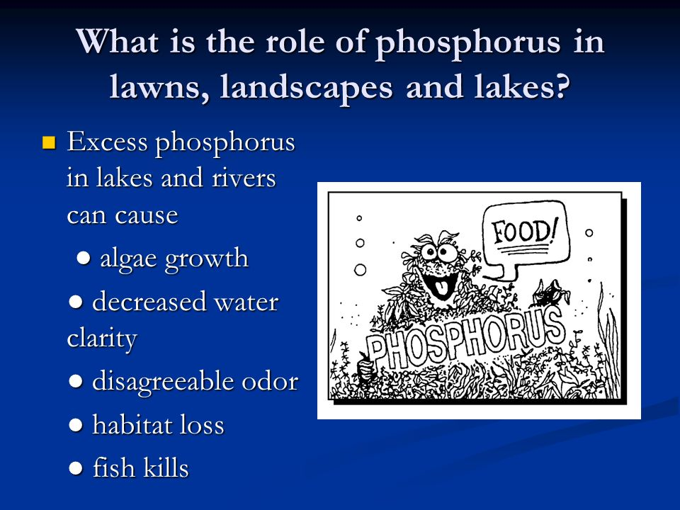 What is the role of phosphorus in lawns, landscapes and lakes? Excess phosphorus in lakes and rivers can cause Excess phosphorus in lakes and rivers c