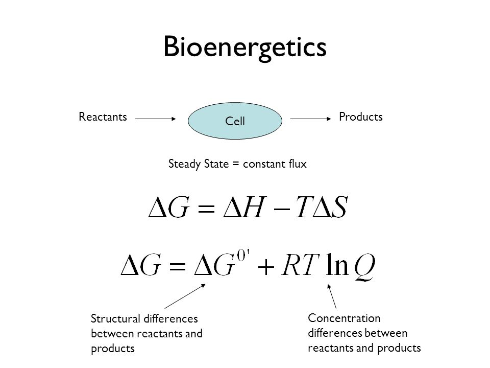 Bioenergetics Cell ReactantsProducts Steady State = constant flux Structural differences between reactants and products Concentration differences betw