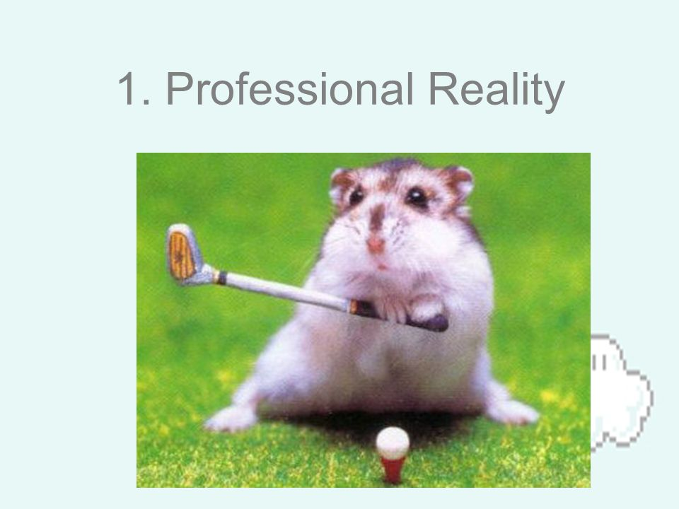 1. Professional Reality