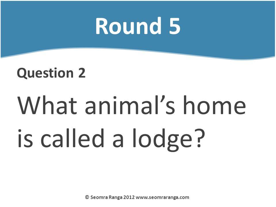 Round 5 Question 2 What animals home is called a lodge? © Seomra Ranga 2012 www.seomraranga.com