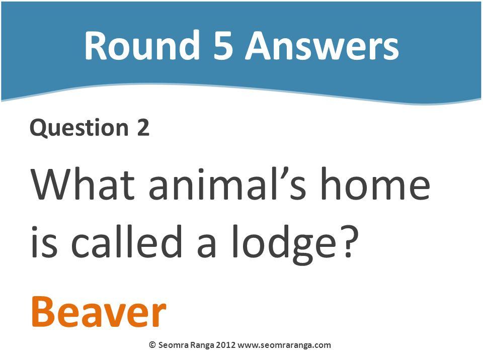 Round 5 Answers Question 2 What animals home is called a lodge? Beaver © Seomra Ranga 2012 www.seomraranga.com