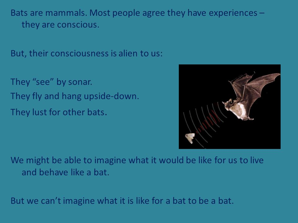 Bats are mammals. Most people agree they have experiences – they are conscious. But, their consciousness is alien to us: They see by sonar. They fly a