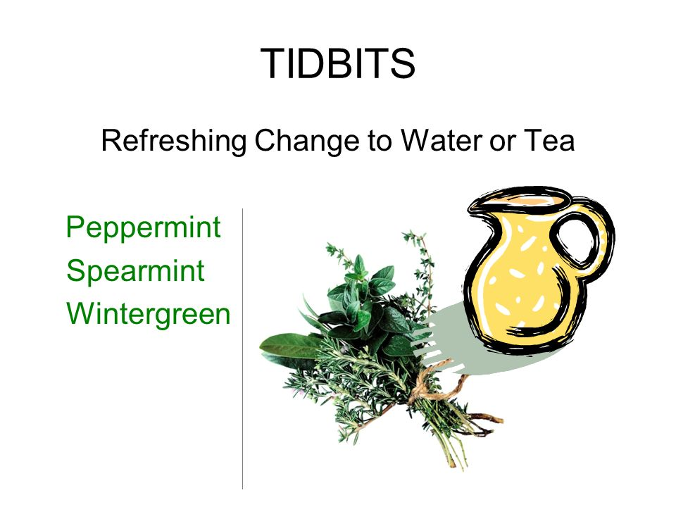TIDBITS Refreshing Change to Water or Tea Peppermint Spearmint Wintergreen