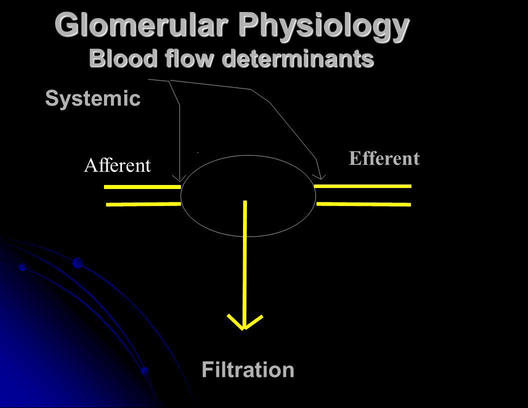 Glomerular Physiology Blood flow determinants Filtration Systemic Efferent Afferent