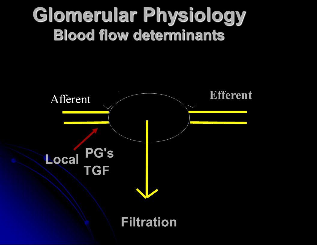 Glomerular Physiology Blood flow determinants Filtration PG s TGF Local Efferent Afferent