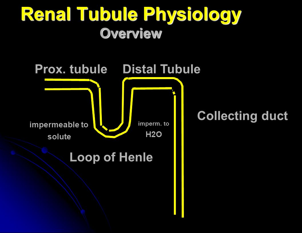 Renal Tubule Physiology Overview Prox.