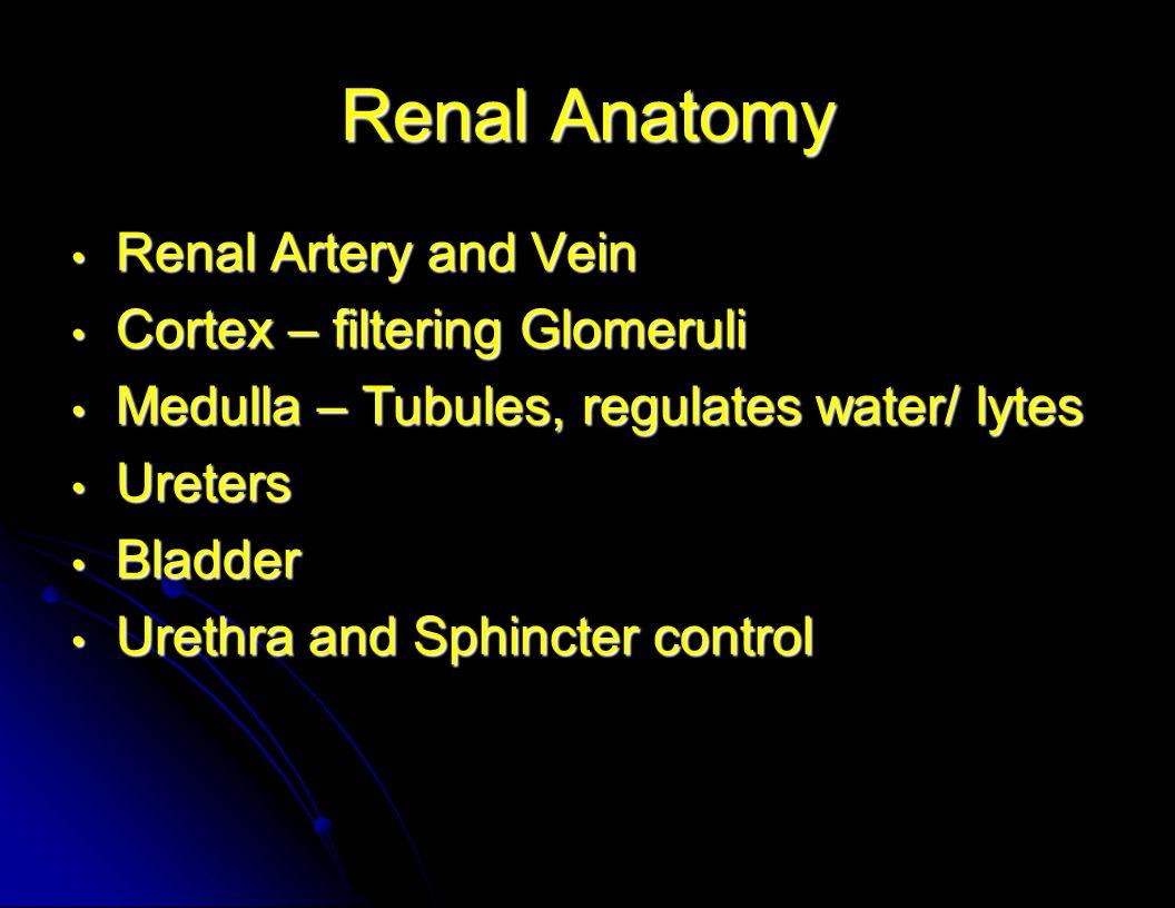 Renal Anatomy Renal Artery and Vein Renal Artery and Vein Cortex – filtering Glomeruli Cortex – filtering Glomeruli Medulla – Tubules, regulates water/ lytes Medulla – Tubules, regulates water/ lytes Ureters Ureters Bladder Bladder Urethra and Sphincter control Urethra and Sphincter control
