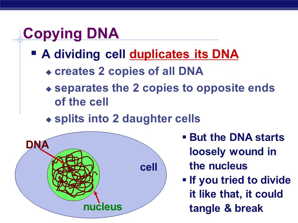 Dividing cells… What has to be copied DNA organelles cell membrane lots of other molecules enzymes animal cellplant cell