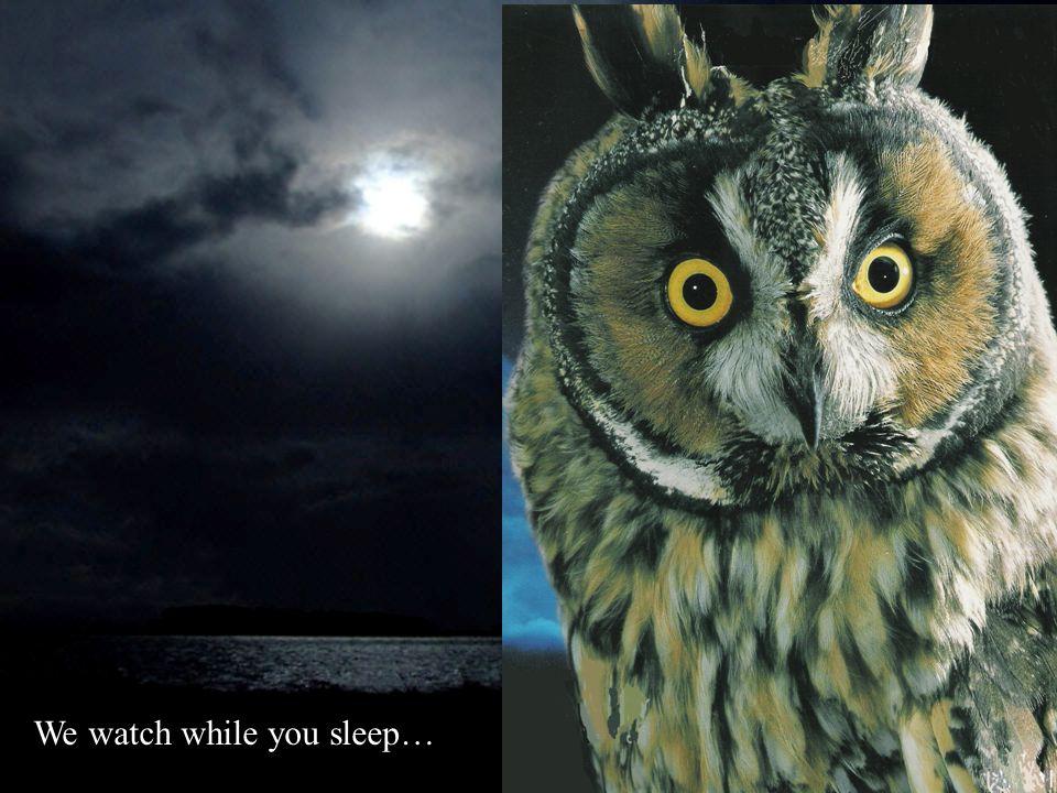 We watch while you sleep…