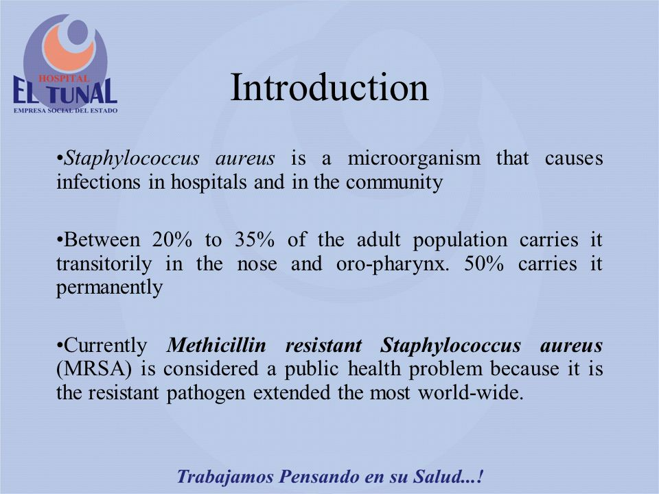 Introduction Staphylococcus aureus is a microorganism that causes infections in hospitals and in the community Between 20% to 35% of the adult population carries it transitorily in the nose and oro-pharynx.