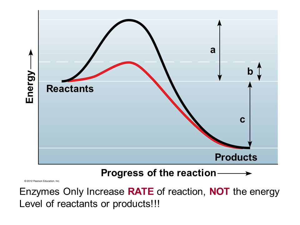 Reactants Products Energy Progress of the reaction a b c Enzymes Only Increase RATE of reaction, NOT the energy Level of reactants or products!!!