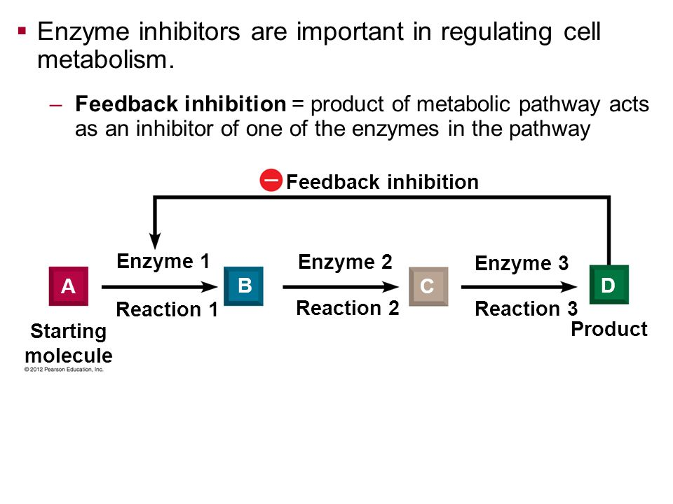 Feedback inhibition Starting molecule Product Enzyme 1 Enzyme 2 Enzyme 3 Reaction 1 Reaction 2 Reaction 3 A B C D Enzyme inhibitors are important in r