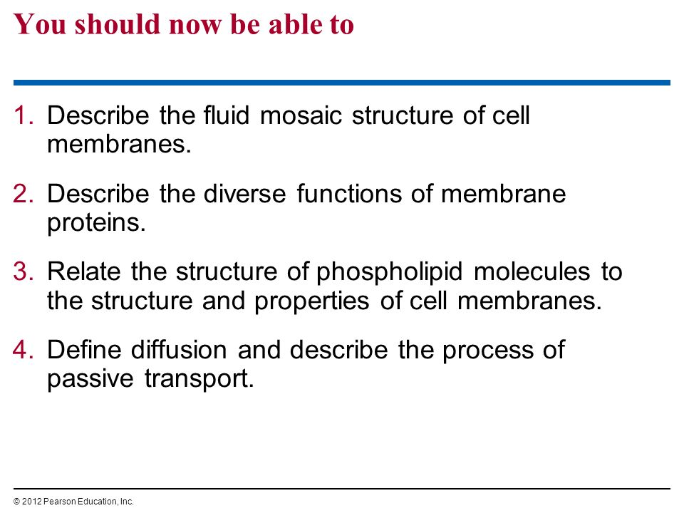 1.Describe the fluid mosaic structure of cell membranes. 2.Describe the diverse functions of membrane proteins. 3.Relate the structure of phospholipid
