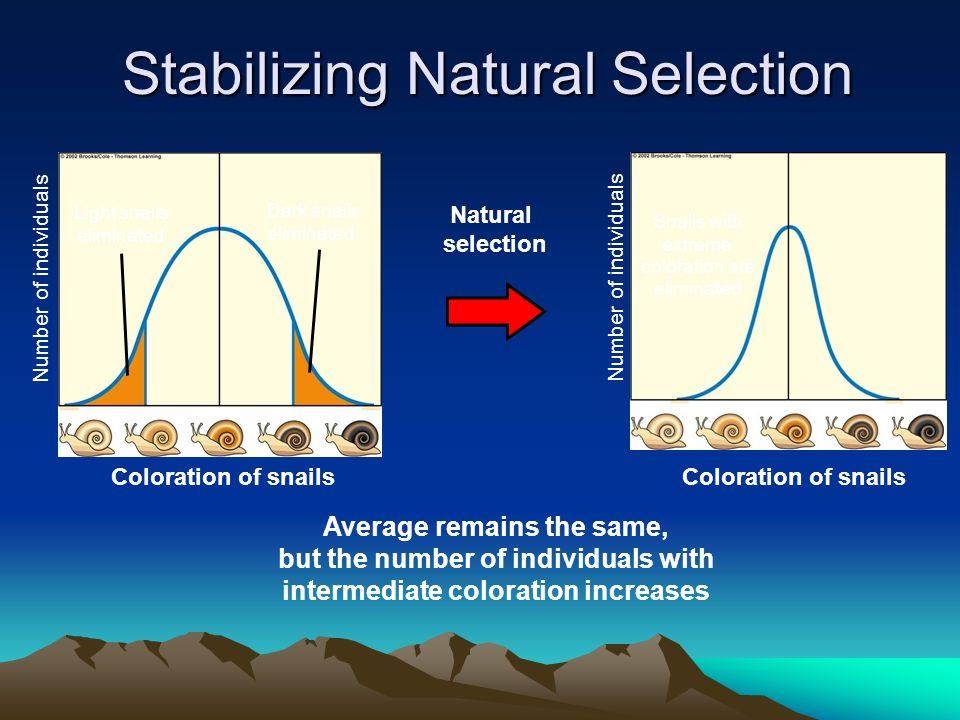 Coloration of snails Light snails eliminated Dark snails eliminated Number of individuals Coloration of snails Snails with extreme coloration are elim