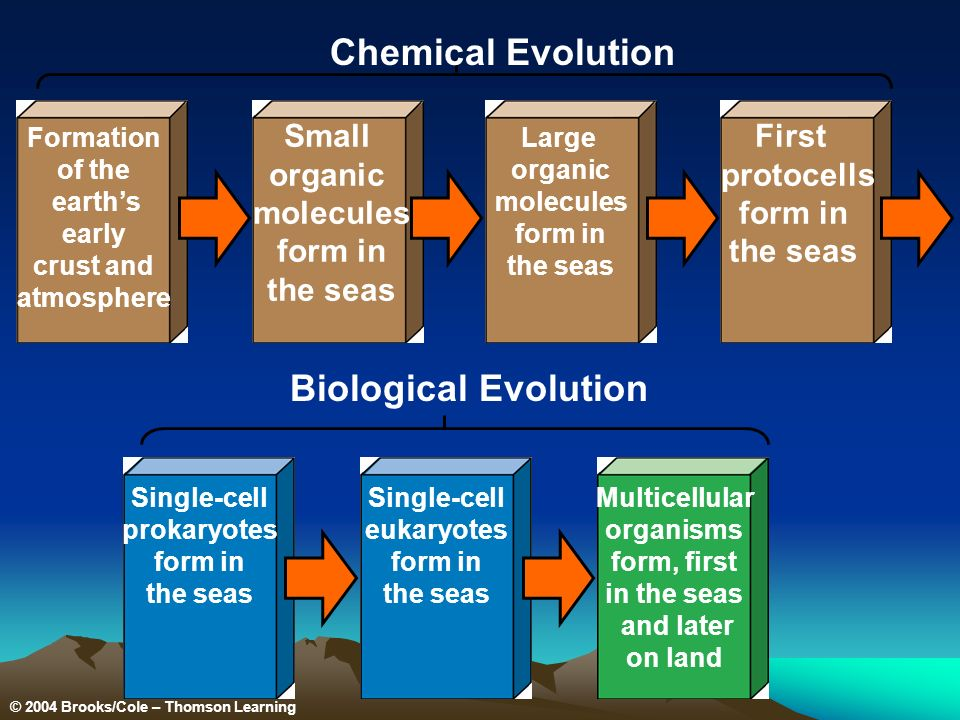 Formation of the earths early crust and atmosphere Small organic molecules form in the seas Large organic molecules form in the seas First protocells