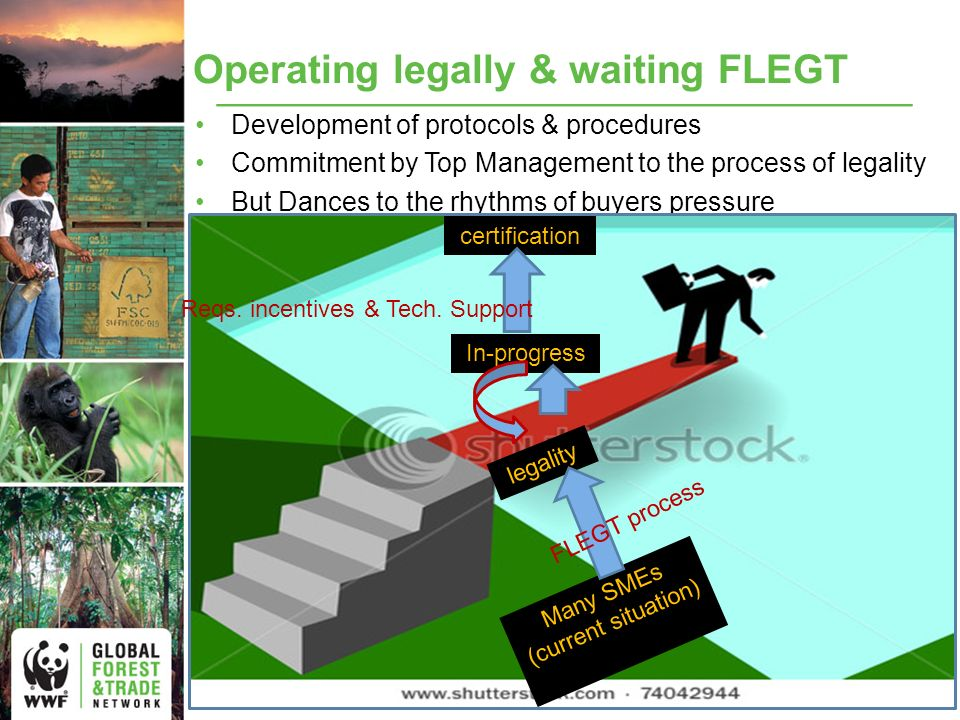 Operating legally & waiting FLEGT Development of protocols & procedures Commitment by Top Management to the process of legality But Dances to the rhythms of buyers pressure In-progress Many SMEs (current situation) certification legality FLEGT process Reqs.