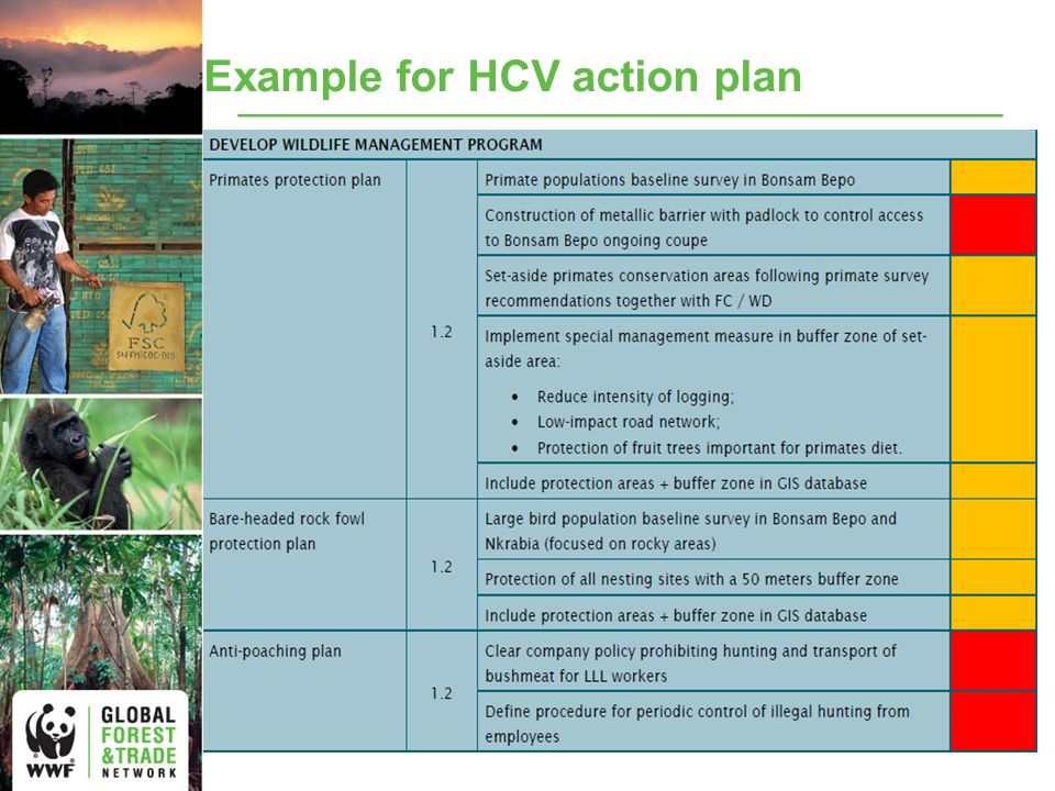 Example for HCV action plan