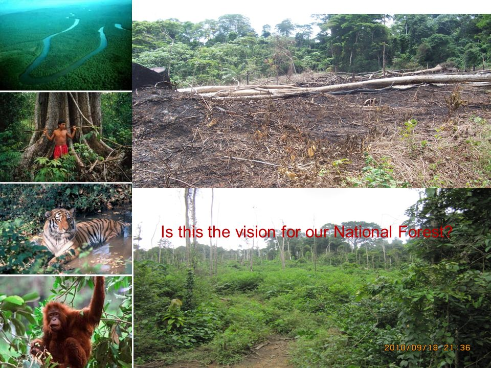 Is this our vision for global forests Is this the vision for our National Forest
