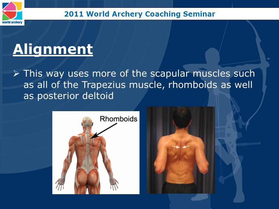 Alignment This way uses more of the scapular muscles such as all of the Trapezius muscle, rhomboids as well as posterior deltoid 2011 World Archery Co