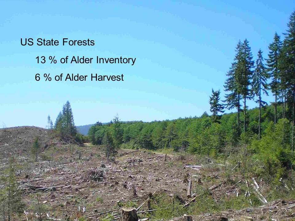 US State Forests 13 % of Alder Inventory 6 % of Alder Harvest