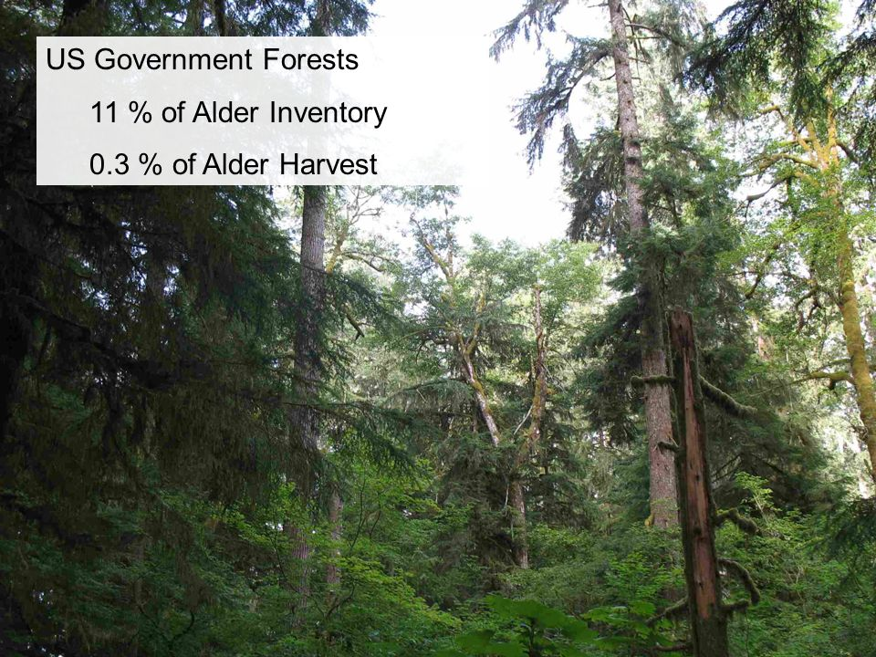 US Government Forests 11 % of Alder Inventory 0.3 % of Alder Harvest