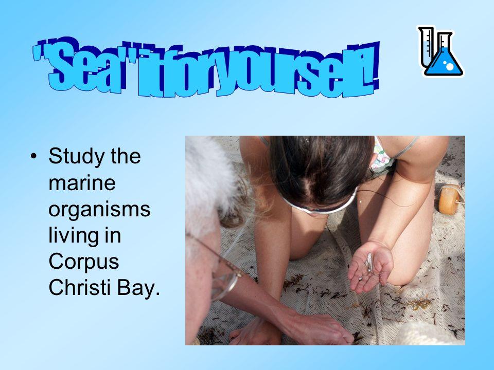 Study the marine organisms living in Corpus Christi Bay.
