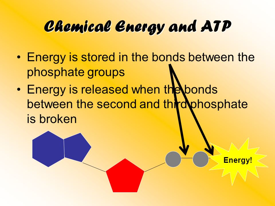 Chemical Energy and ATP Energy is stored in the bonds between the phosphate groups Energy is released when the bonds between the second and third phos