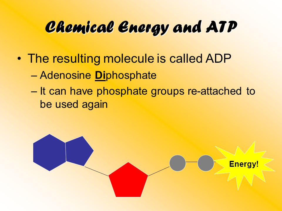 Chemical Energy and ATP The resulting molecule is called ADP –Adenosine Diphosphate –It can have phosphate groups re-attached to be used again Energy!