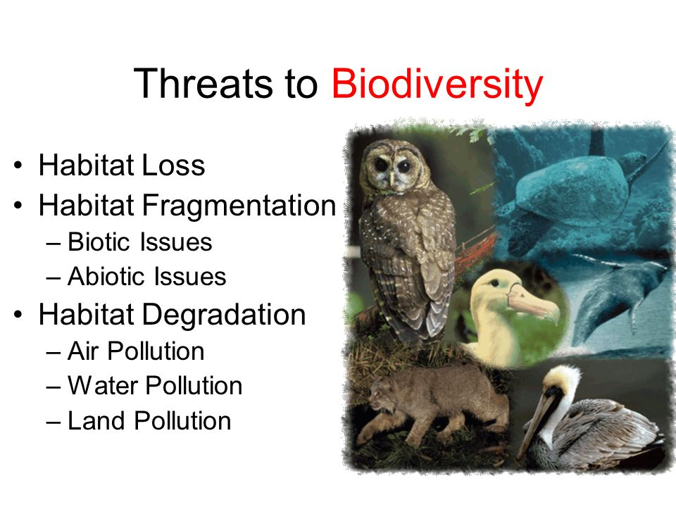Threats to Biodiversity Habitat Loss Habitat Fragmentation –Biotic Issues –Abiotic Issues Habitat Degradation –Air Pollution –Water Pollution –Land Po