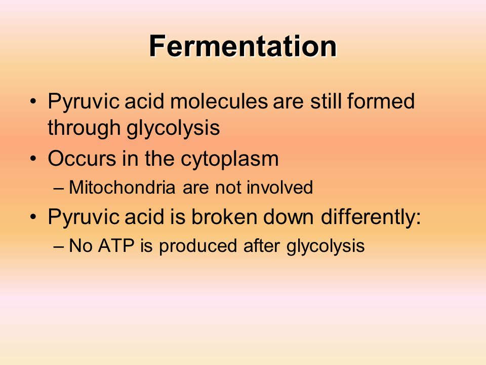 Fermentation Pyruvic acid molecules are still formed through glycolysis Occurs in the cytoplasm –Mitochondria are not involved Pyruvic acid is broken