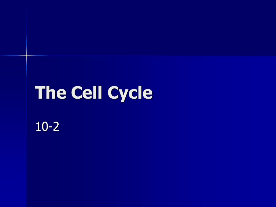Cell Division –In plant cells: A cell plate forms between the two nuclei A cell plate forms between the two nuclei Cell plate turns into the new cell membrane Cell plate turns into the new cell membrane New cell wall forms around the cell membrane New cell wall forms around the cell membrane