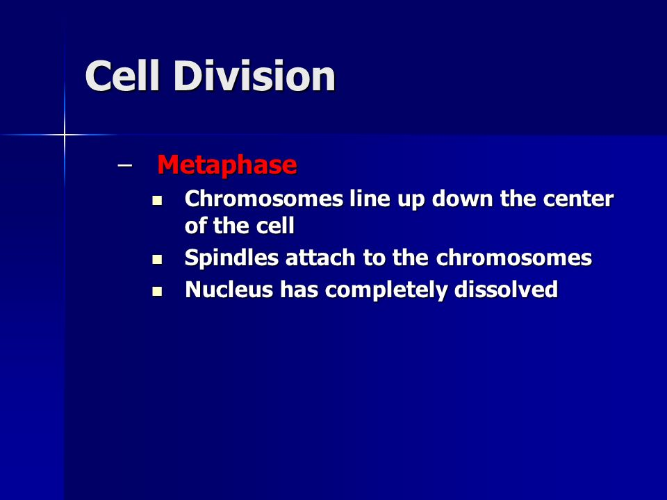 Cell Division –Metaphase Chromosomes line up down the center of the cell Chromosomes line up down the center of the cell Spindles attach to the chromo