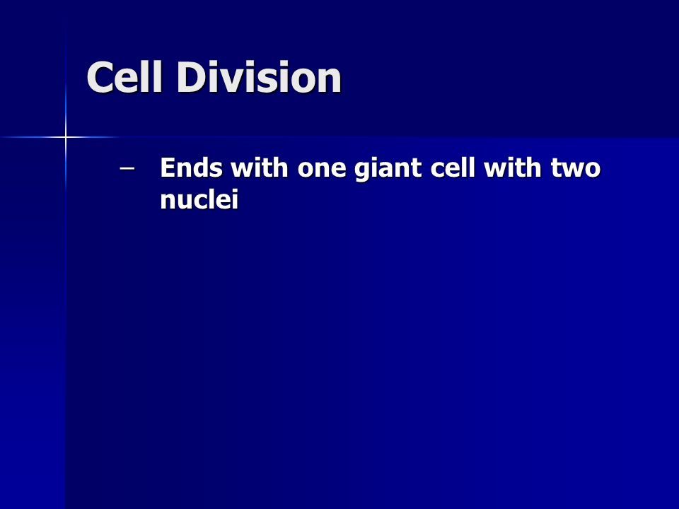 Cell Division –Ends with one giant cell with two nuclei