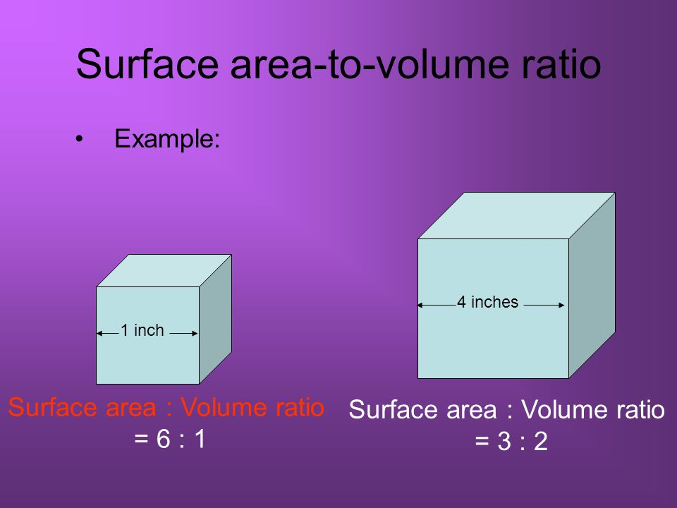 Surface area-to-volume ratio Example: Surface area : Volume ratio = 3 : 2 4 inches Surface area : Volume ratio = 6 : 1 1 inch